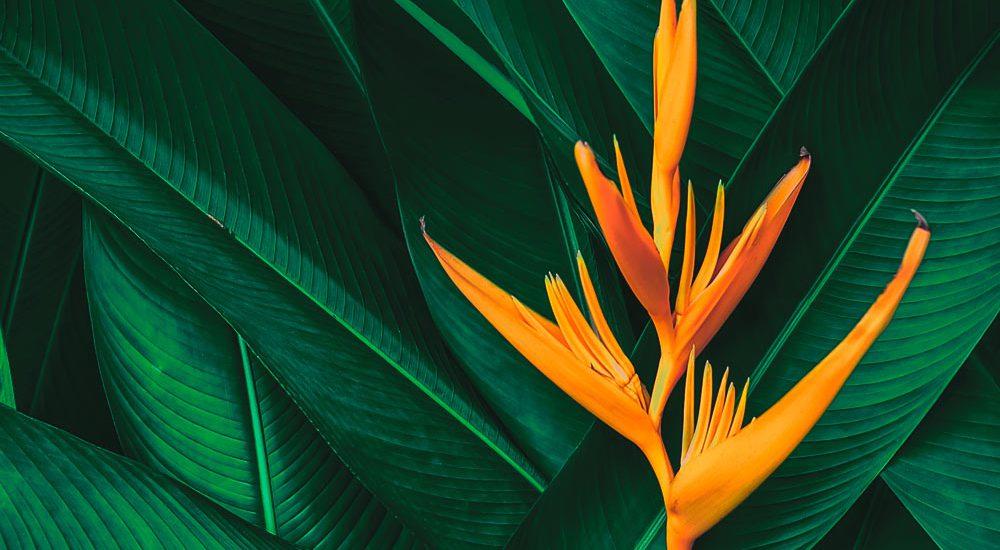 Sfondo pianta | Kléral System