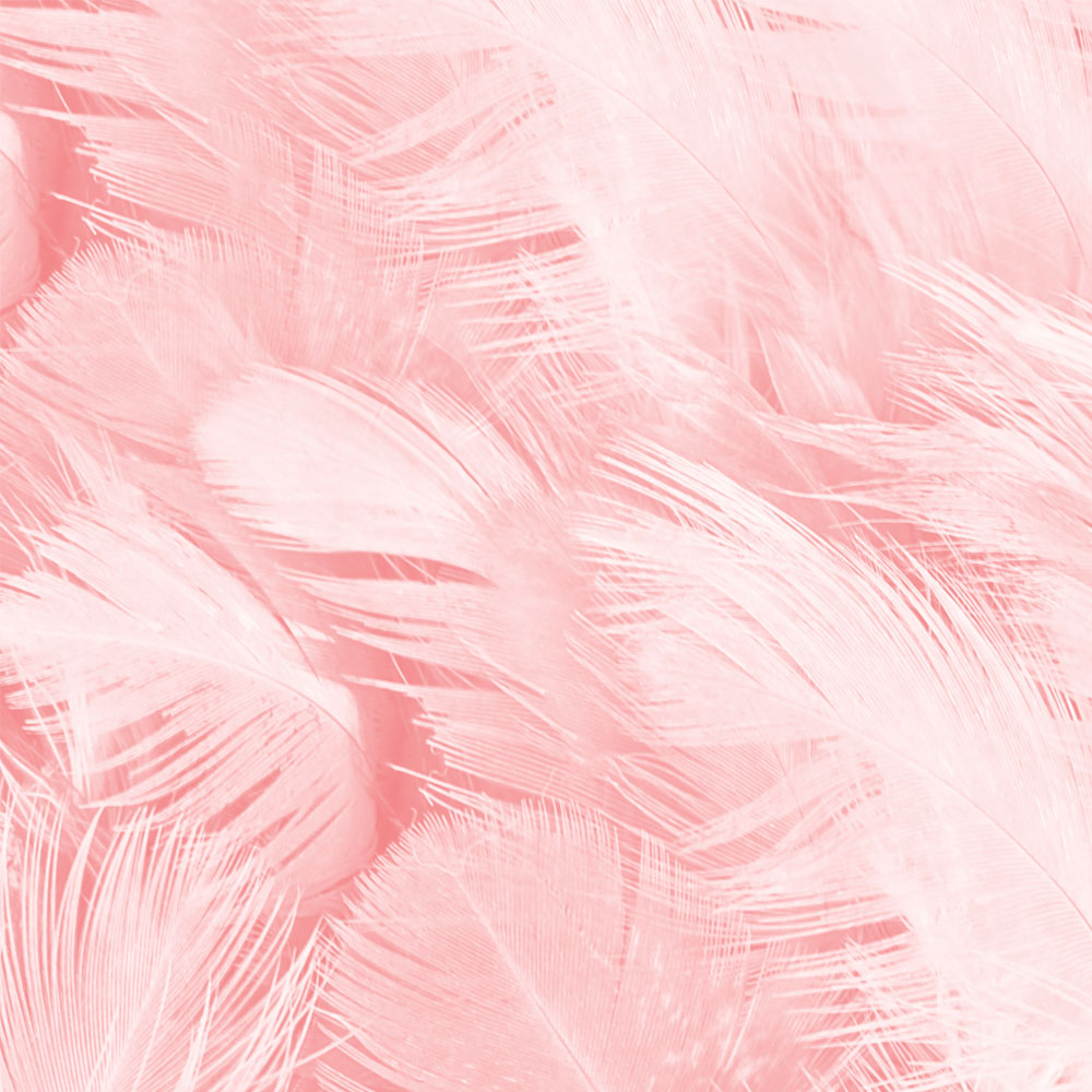 Piume rosa | Kléral System